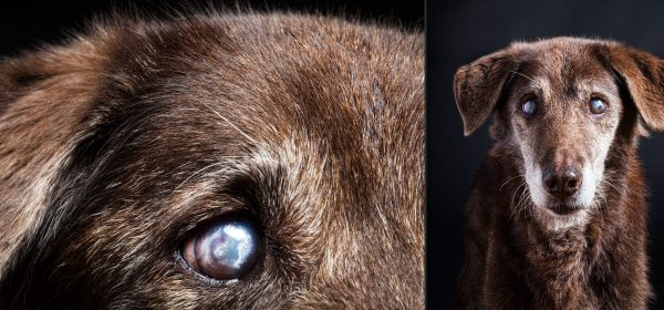 Senior pet portrait photography of Kayla the dog by Vermont photographer Judd Lamphere at Reciprocity Studio in Burlington.