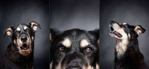 Senior pet portrait photography of Sadie the senior dog by Vermont photographer Judd Lamphere at Reciprocity Studio in Burlington.
